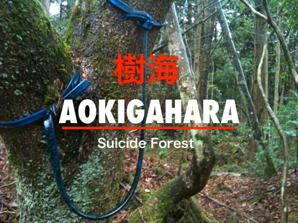aokigahara-suicide-forest