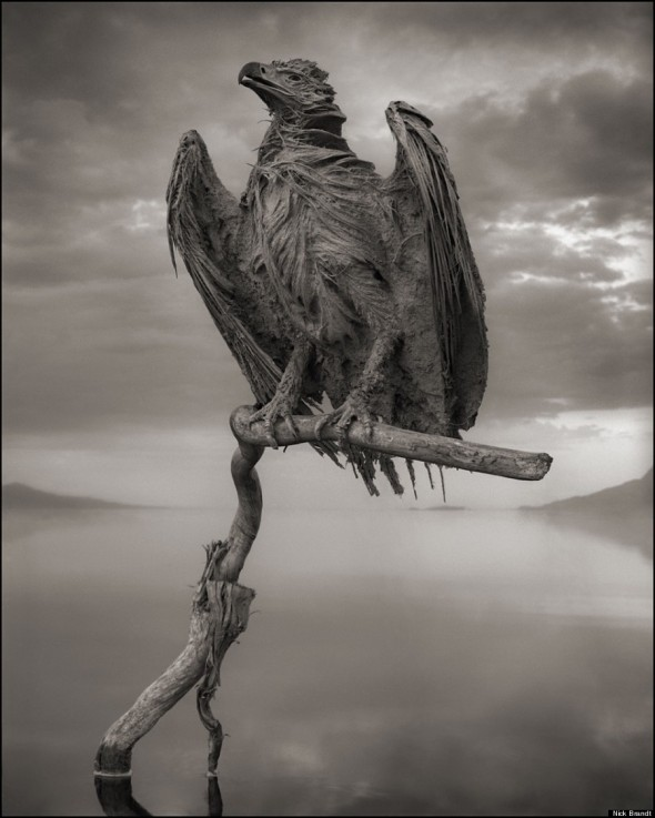 2 NICK BRANDT CALCIFIED-FISH-EAGLE-900