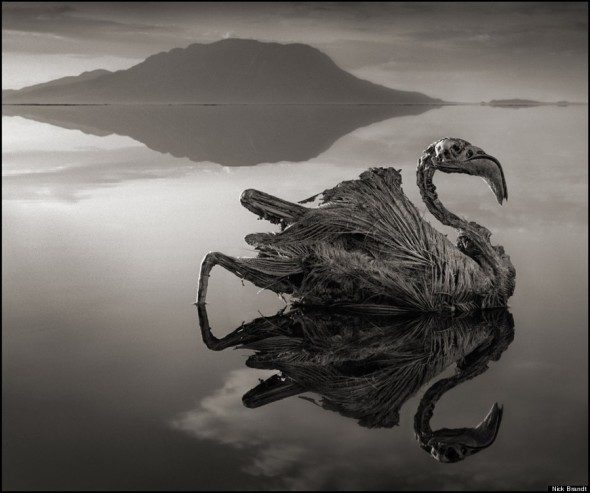3 NICK BRANDT-CALCIFIED-FLAMINGO-900