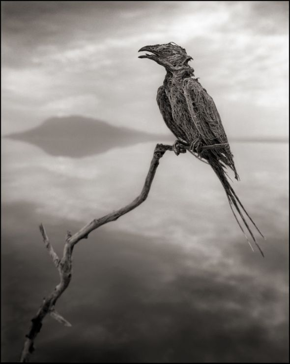 4 Nick Brandt Bird Calcified