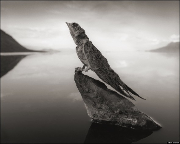 5 NICK BRANDT CALCIFIED-SWALLOW-900