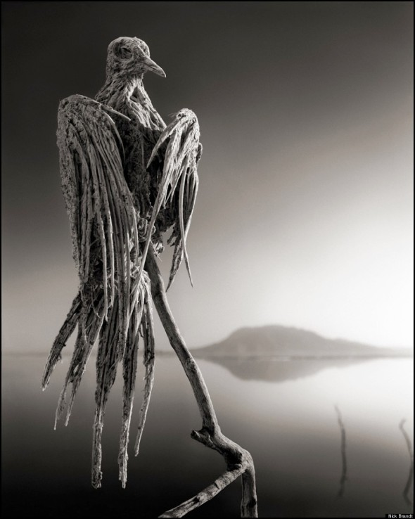 6 NICK BRANDT CALCIFIED-DOVE-900